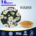 Natural Feverfew Extract,10:1/Chrysanthemum parthenium Extract,10:1