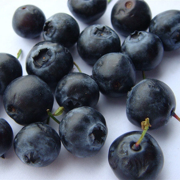 IQF frozen style fresh blueberry