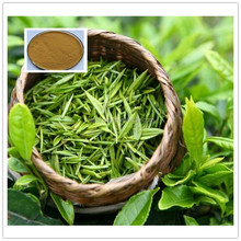 Green Tea Powder Tea Polyphenols Green Tea Extract