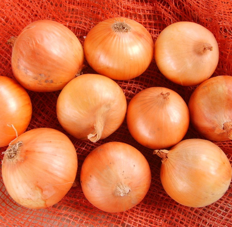 Yellow Gansu onion/5-7cm/6-9cm