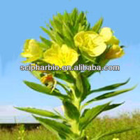 Pure Evening Primrose Oil best quality best price
