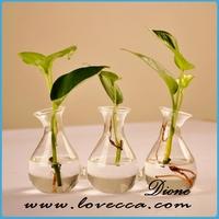 Carnivorous Plant Terrarium antique murano glass vases