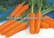2017 new bulk fresh carrot sweet carrot for sale