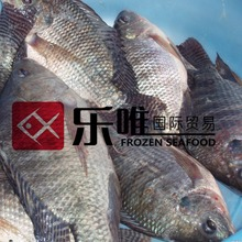 Frozen tilapia WR wholesale price from tilapia factory exporter