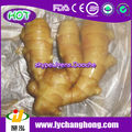Chinese Organic Fresh Ginger Root From Weifang