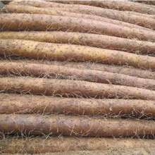 Chinese fresh yam for hot sale and with HACCP AND ISO