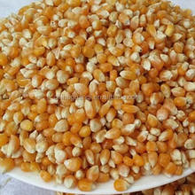 best price corn feed in bulk for sale