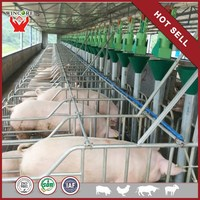 Automatic Pig feeding equipment equipment for farm pig