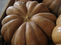 convencional and organic pumpkins
