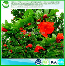 High quality Pomegranate Leaf Extract/alibaba wholesale