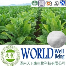 Hot sale Tobacco extract/Solanesol 98%/Tobacco leaf extract/Antiulcer plant extract