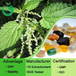 100% natural Nettle extract Nettle extract