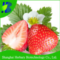 High quality strawberry seeds for growing