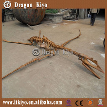 2015 new Real Dinosaurs Skeleton Fossil for sale