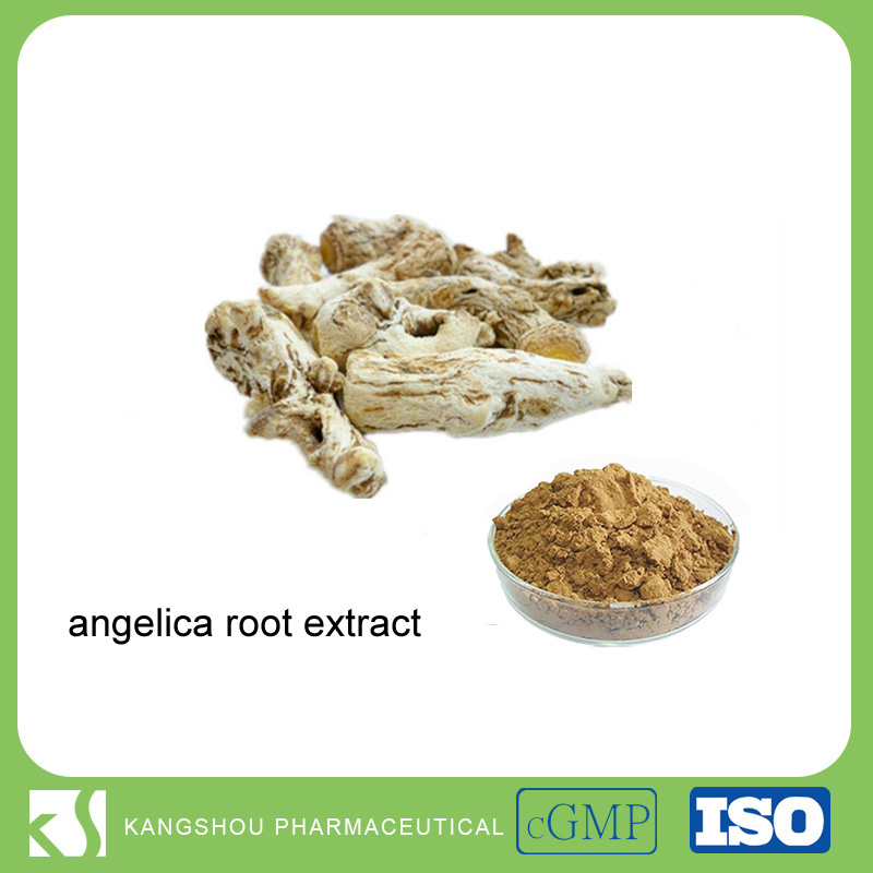 Herb Medicine 0.6% ligustilide dong quai angelica root extract powder