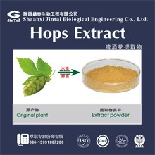 hop extract powder/hops extract/humulus lupulus extract