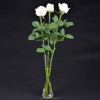 Wide variety Tineke best-selling white rose calla flower ivy