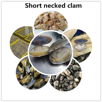 Frozen Cooked Short Necked Clam with Shell