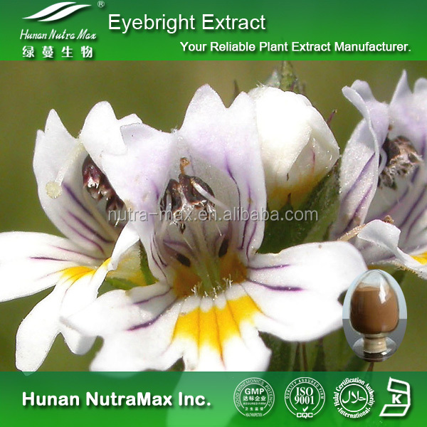 Top Quality Eyebright Extract, Eyebright Herb Extract, Eyebright P.E.