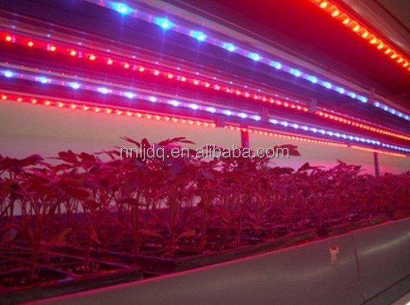 10W LED Grow Tube 0.6m Red/Blue LED Mix LED Grow Light Tube T8 for Lettuce Basil 2ft T8