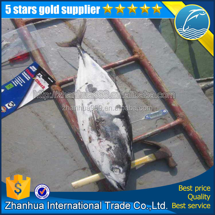 Best selling fresh frozen skipjack tuna frozen tuna fish price