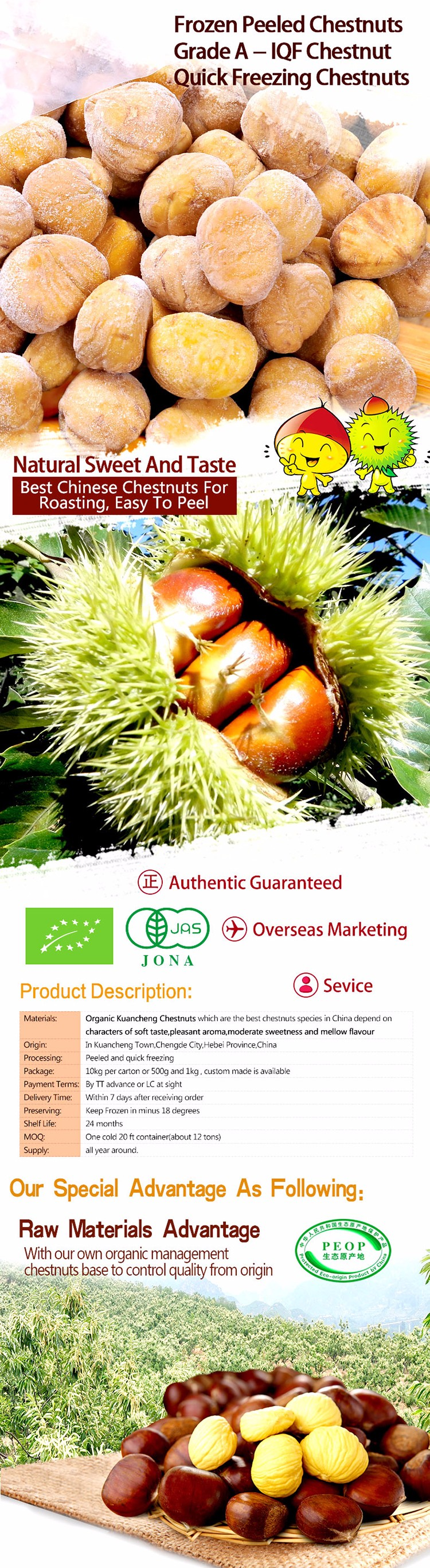 Frozen Peeled Chestnut IQF Chestnuts for sale