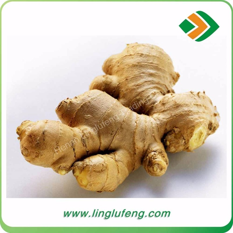Hot china products wholesale supply fresh ginger and air dried ginger