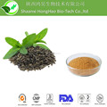 High quality EGCG 98% Green Tea Extract Powder