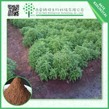 hot selling 5:1 10:1 20:1 coleus forskohlii extracts forskolin/coleus forskohlii extract/coleus forskohlii bark powder