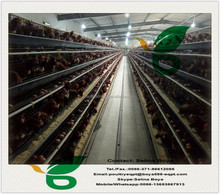 layer rearing cage pullet cage A-type poultry cage