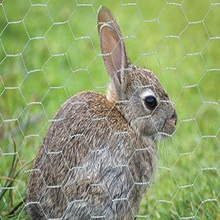 Rabbit Cages Galvanized Hexagonal Wire Mesh For Breeding