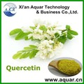 100% Natural Plant Extract Onion P.E. 30% Quercetin