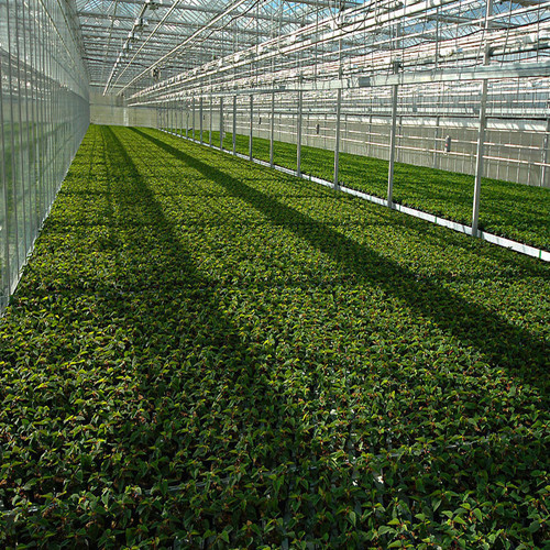 polycarbonate greenhouse for vegetables& greenhouse shelter& greenhouse material