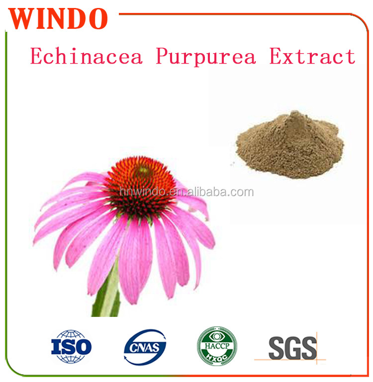 100% Natural Echinacea Purpurea extract in Bulk-High Quality& Best Service