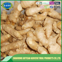 2017 hot promotional cheap supply fresh ginger and air dried ginger China professional manufacturer