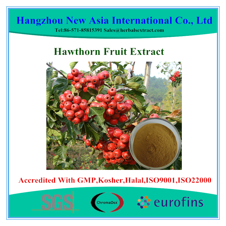 100% Pure Natural Hawthorn berry extract powder/hawthorn berry p.e.