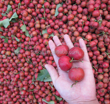 Fresh Hawthorn berry