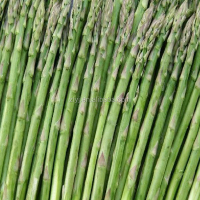 Best selling IQF processed tips and cut frozen green asparagus for sale