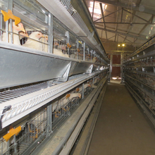uganda poultry farm automatic chicken layer cage BYH-01E