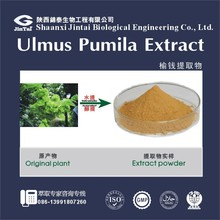 100% pure natural ulmus pumila leaf extract powder