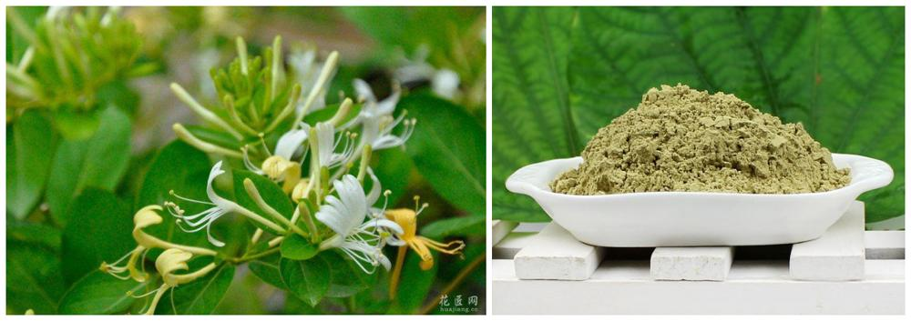 high quality Honeysuckle Flower Powder factory direct sale and good price
