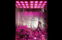 2014 fashion Newest style 5 watt 40x5W LED Grow Light for plants