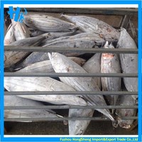Frozen skipjack tuna on sale