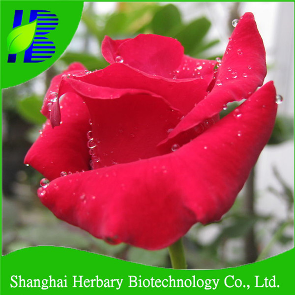 Professional Flower Seed Company Shanghai Herbary Supply Rose Flower Seeds
