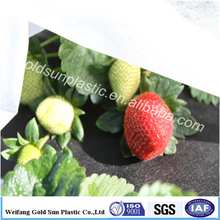 Weed blocking fabric commercial timber plantations weed mat fully UV stabilized for strawberry use