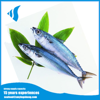 Frozen Pacific Mackerel fish from China supplier