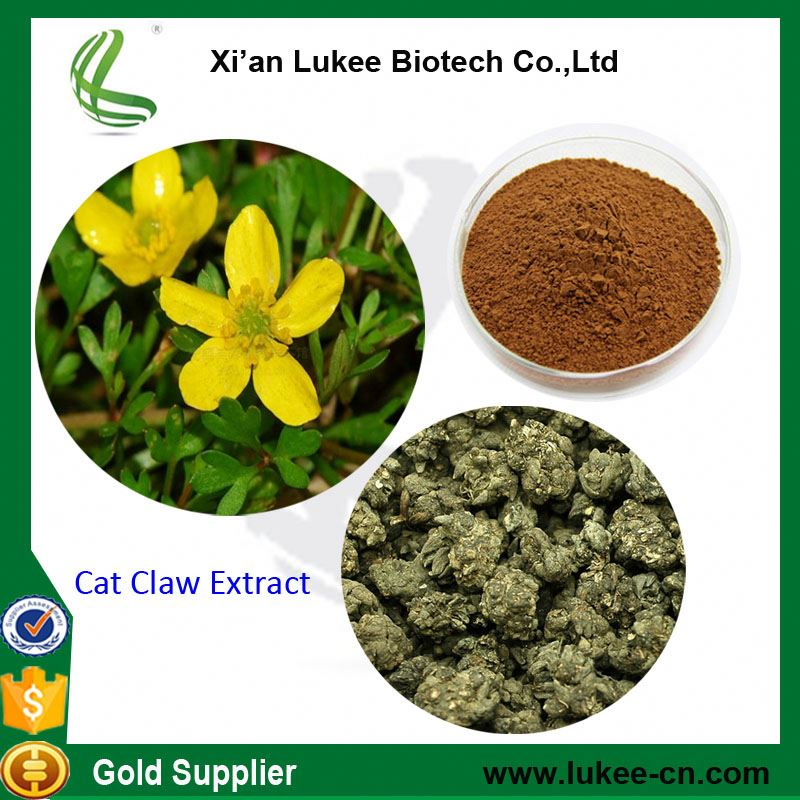 Herb Medicine cat's claw extract with Health Benefits