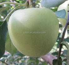 types of green apples hot for sale