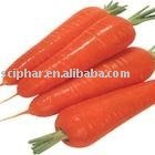 good quality nice price Carrot seed essential oil