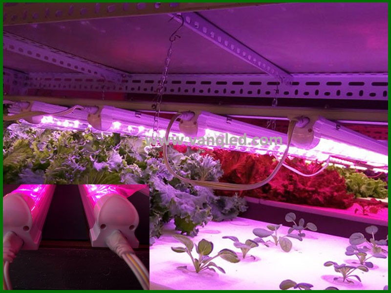 Wholesales Shenzhen LED Manufacturer for 20w 4ft full spectrum LED Grow Light Bar for vertical farming/aeroponic growing systems